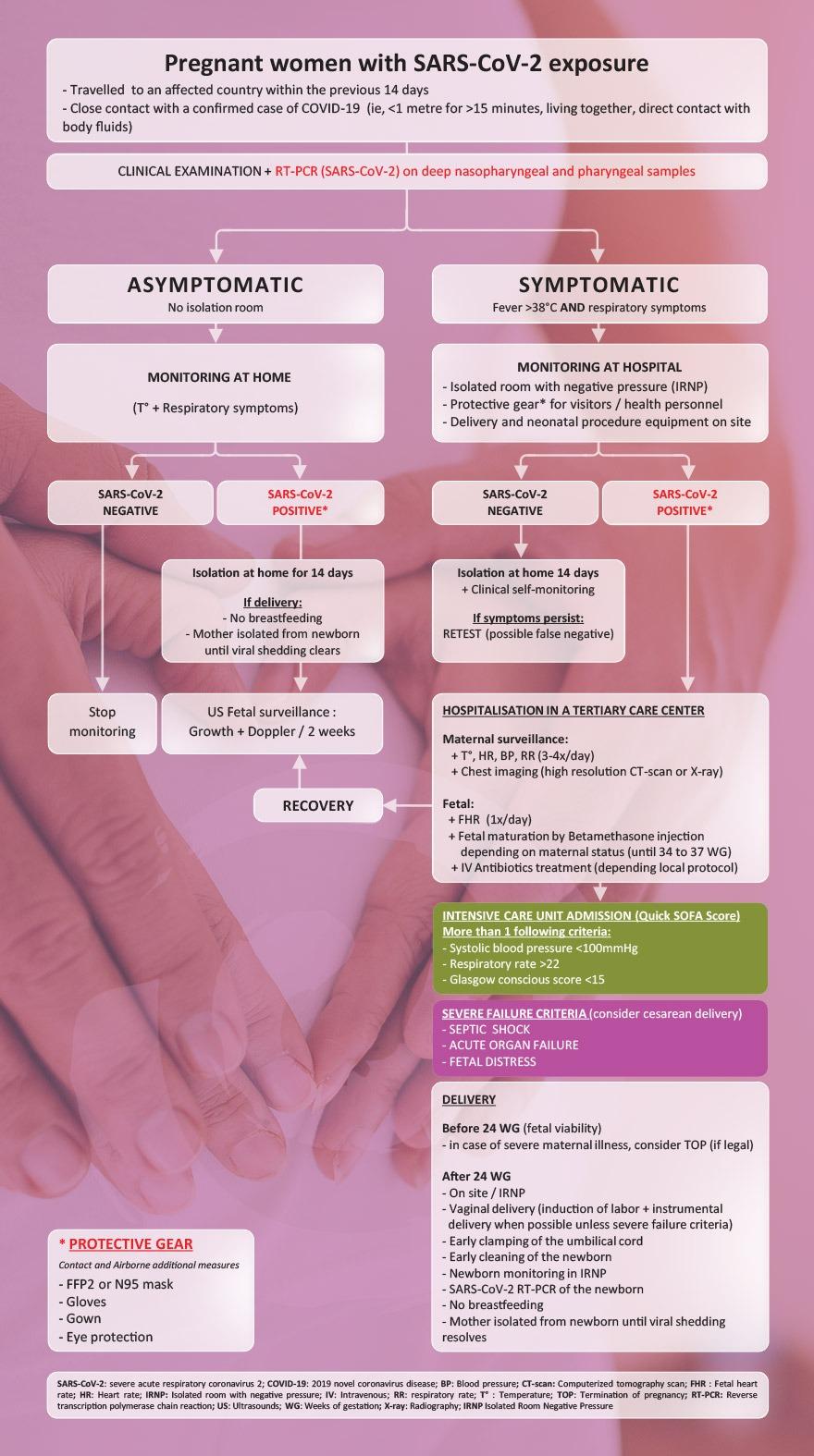 ivf-Corona-guideline-flowchart